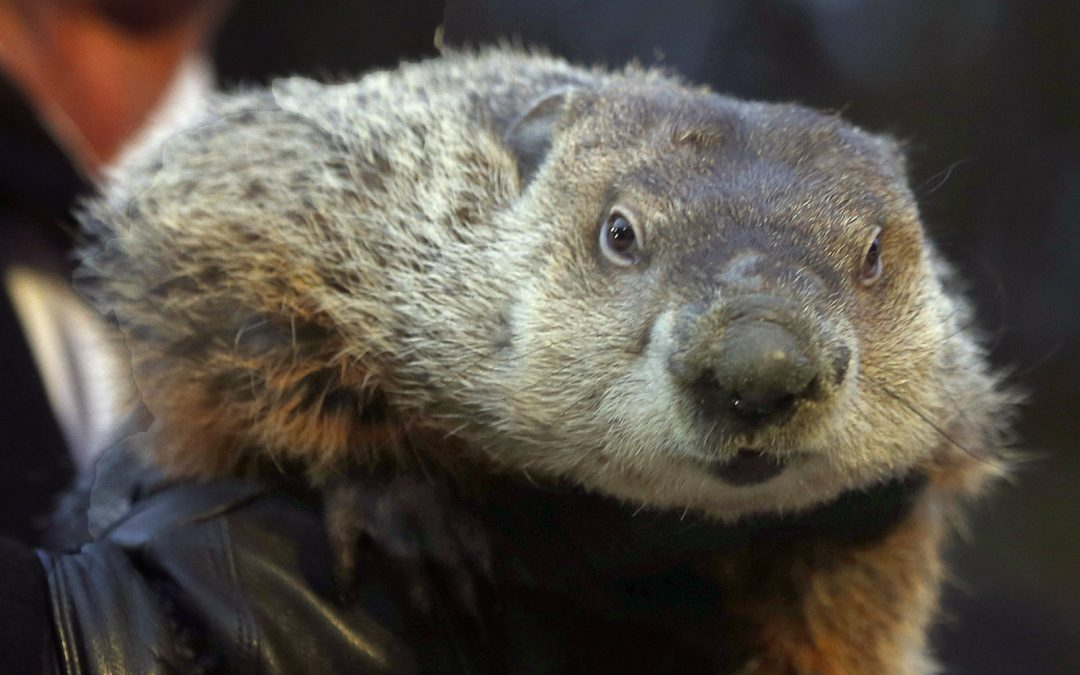 GROUND HOG DAY TOMMOROW .THAT MEANS DRIVE IN SEASON IS AROUND THE CORNER AGAIN..