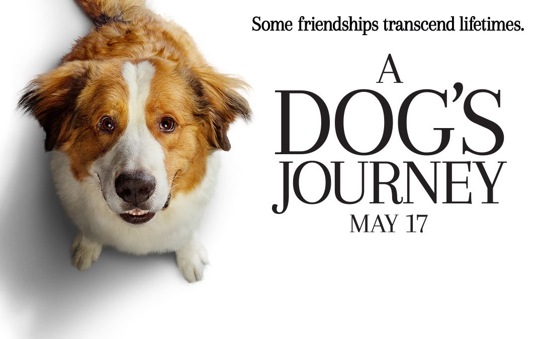 'A Dog's Journey' Review